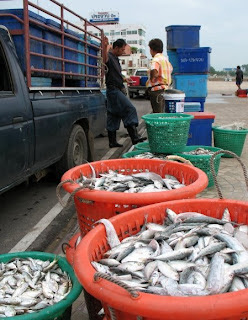 Fresh Fish, Prachuap Khiri Khan