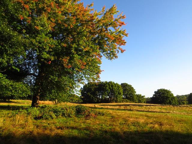 The Tumulus Field