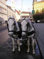 fiacre, Vienna