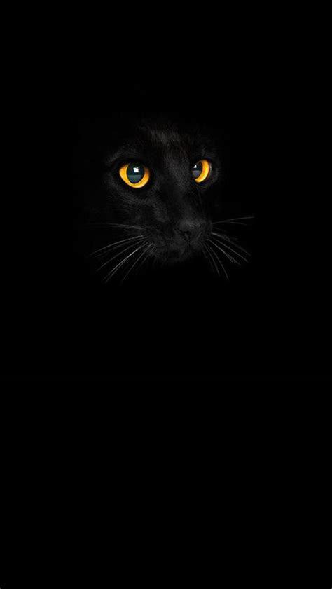 black cat iphone  wallpapers iphone wallpapers