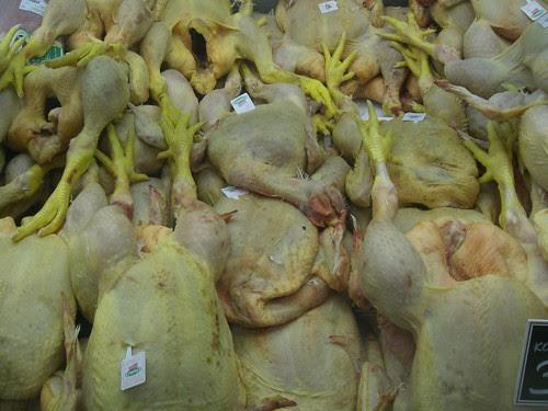 italian chickens
