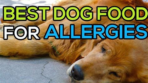 dog food  skin allergies top   dog food