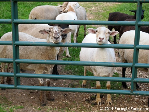 Sheep Chin Rest - Farmgirl Fare