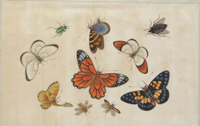 hand-painted butterflies & insects from Chinese watercolour album 1800s
