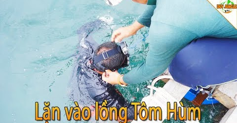 Thợ lặn vào lồng Tôm Hùm bắt Tôm Hùm | Duy Jungle