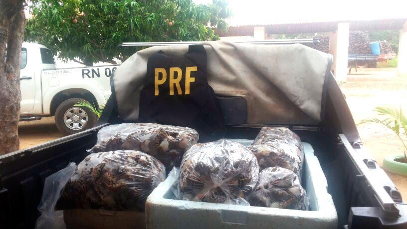 Lagosta estava dentro de caixas de isopor e sacos na BR-304, em Mossoró (Foto: Divulgação/PRF)