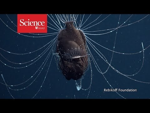 GeoGarage blog: Deep-sea anglerfish caught mating in first ...