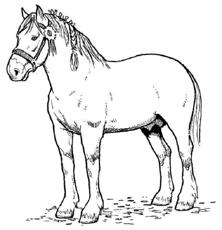 horse coloring pages free coloring pages 13