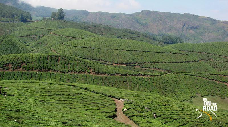 Tea Estates at Munnar