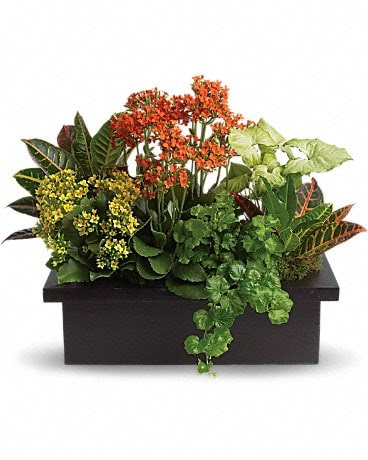 Stylish Plant Assortment In Greensburg Pa Blue Orchid Floral