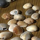 Go Shells by Mary-Ellen Peters