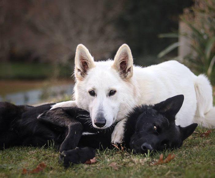 dog-wedding-photograpy-kaya-smiley-10