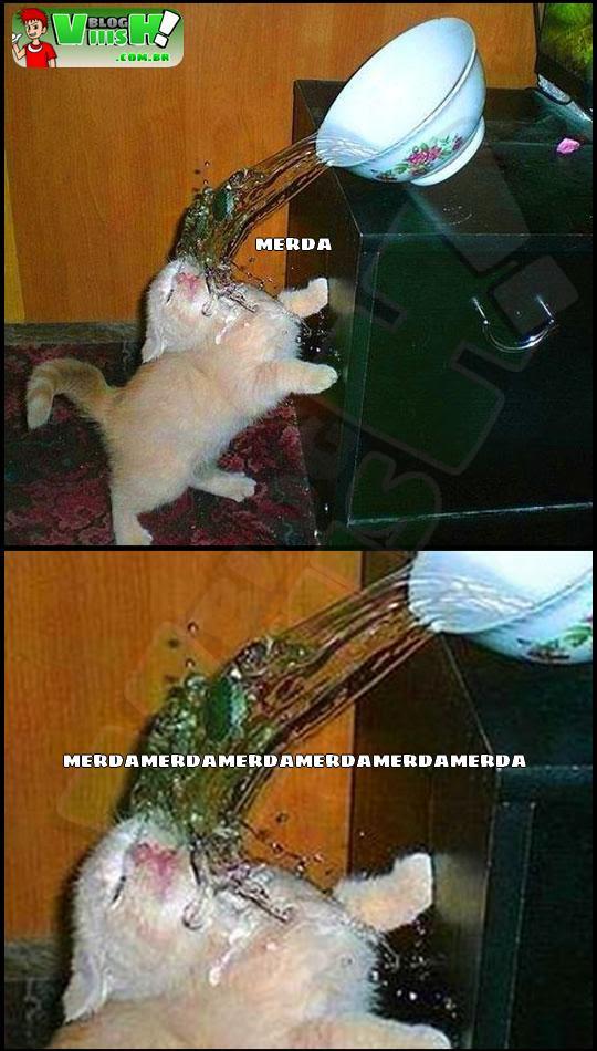 Blog Viiish - Momento certo da derrota felina