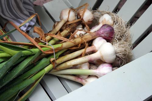 garlic 012