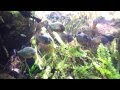 New York Aquarium  - 6.16.12 - 005.mp4
