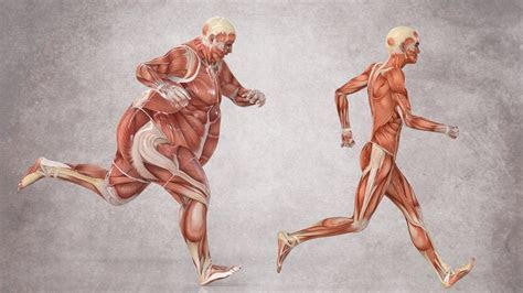 Overweight People Face Changes in Dopamine and This Impacts Their Physical Activity Trends