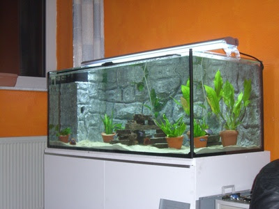 How to Set Up a 10-Gallon Freshwater Fish Tank - Pets