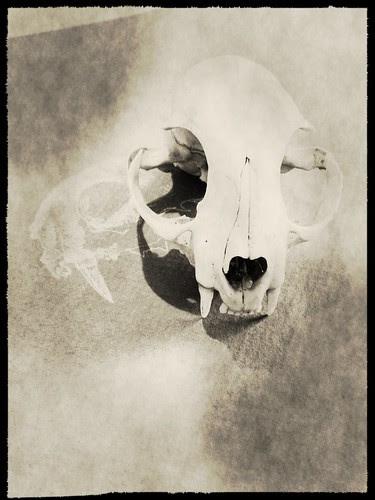 Skull by megan_n_smith_99
