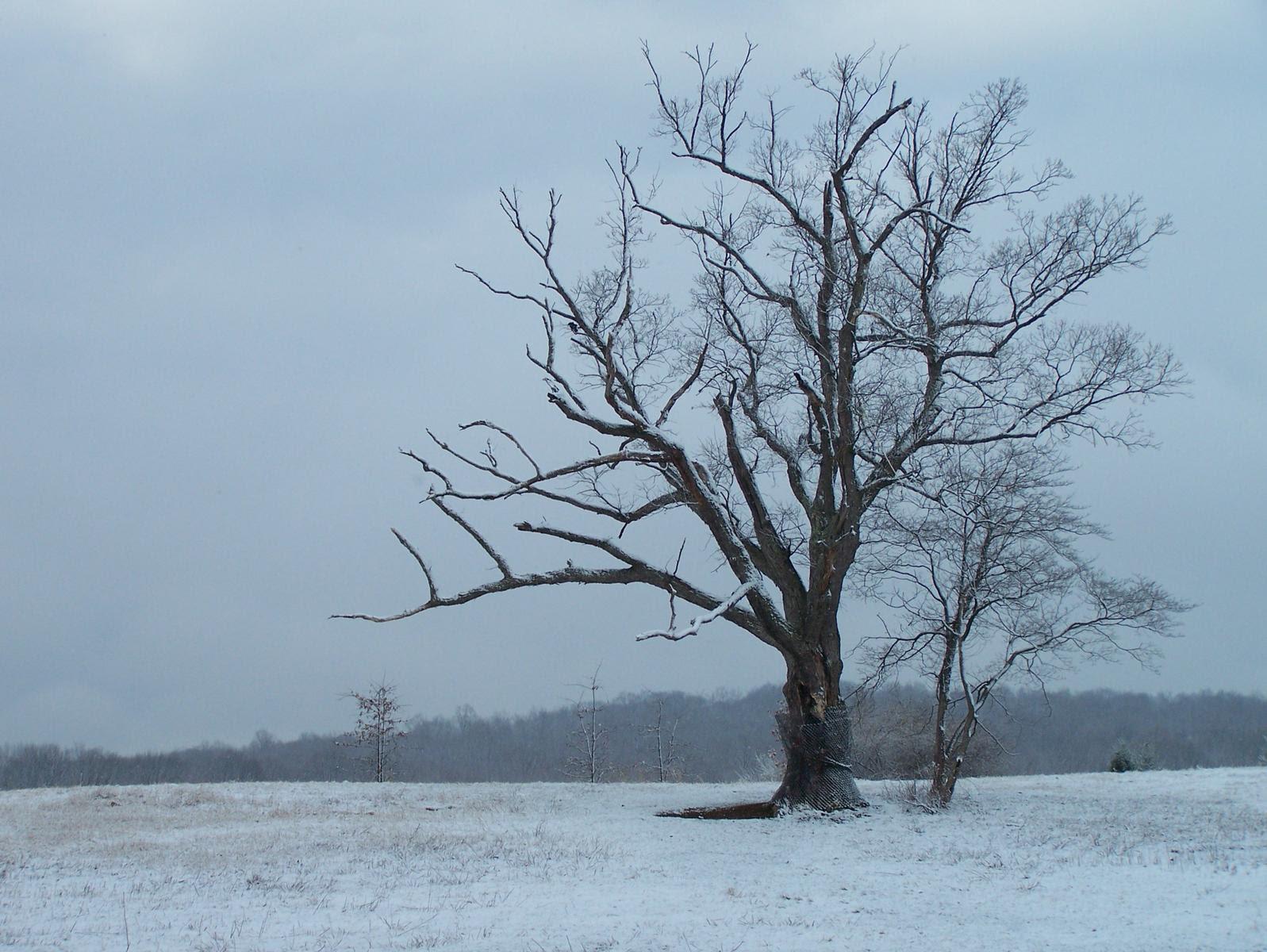 http://www.city-data.com/forum/attachments/photography/52484d1257694500-photos-trees-devils-tree.jpg