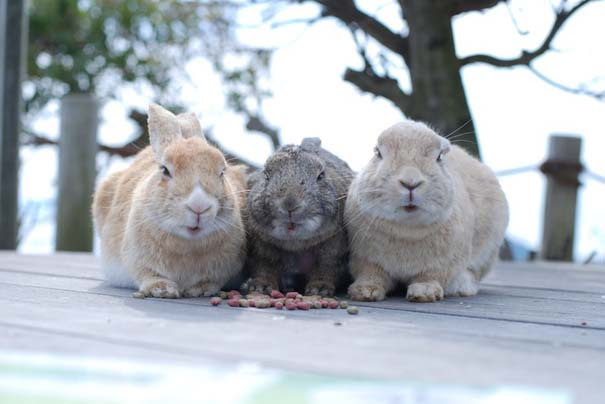 Υπέροχες φωτογραφίες φιλίας ζώων που θα σας φτιάξουν τη διάθεση (1)