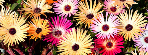 FB Cover Multicolor Flowers