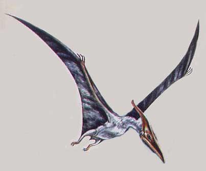 imagen de pterodactilo
