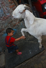 Marziya Shakir and the Hand Shaking Goat by firoze shakir photographerno1