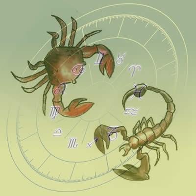 torrtidebpa: Passen skorpion und krebs zusammen