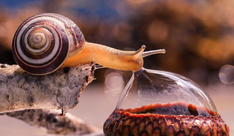 5. Snail drinking from water droplets.  unusual, amazing photos,