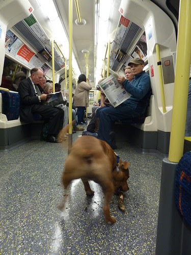 Dog riding London Underground