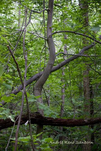 Bent Wood-1.jpg