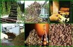 Imagem de vegetais: cana, madeira, madeira queimando.