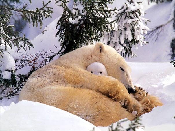 20 Lovely kiddies animals