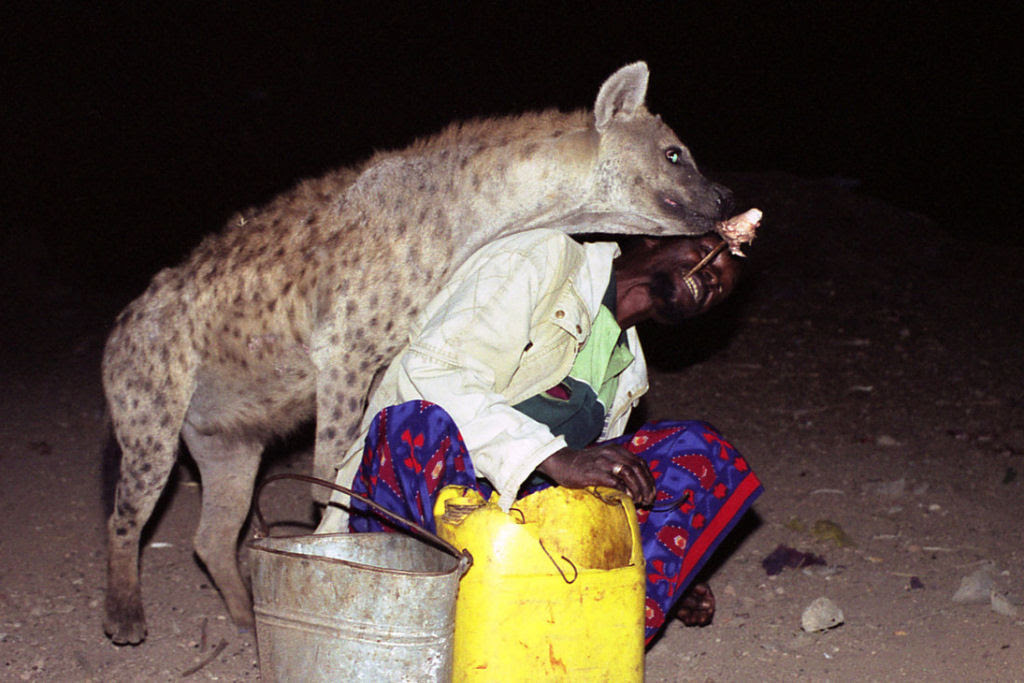 """Os """"homens-hiena"""" de Harar alimentam hineas selvagens à mão todas as noites"""