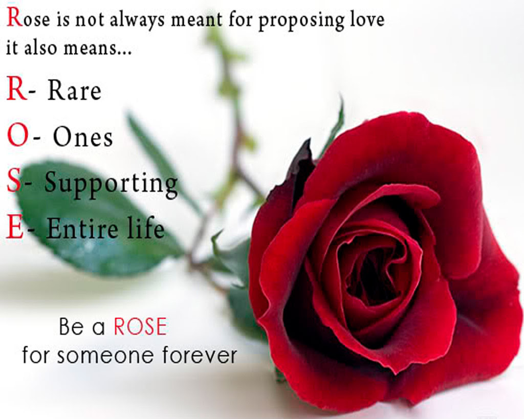 25 Rose Day Special Images With Full Of Love Preet Kamal