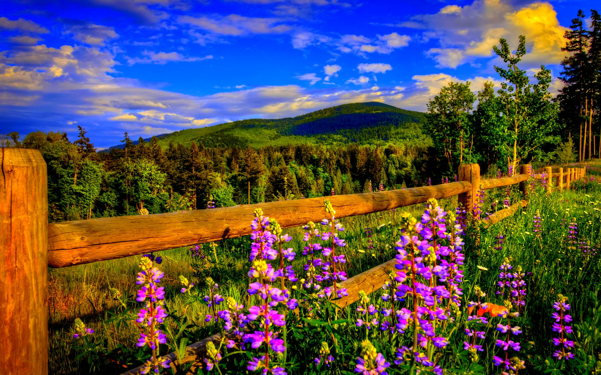 spring wallpaper cool flowers  HD Desktop Wallpapers  4k HD