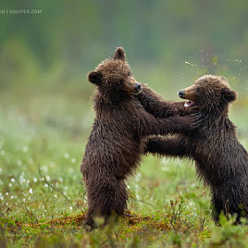 Smack! by Marsel van Oosten (MarselvanOosten)) on 500px.com
