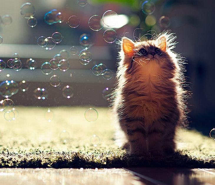 20 gatinhos fofos