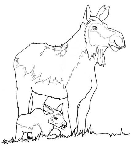 75 Top Free Coloring Pages Cow And Calf Pictures