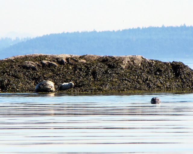 2011-07-24 - Discovery Island_0002 copy