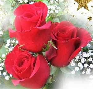 Imagenes De Rosas Con Frases De Amor Para Enamorar