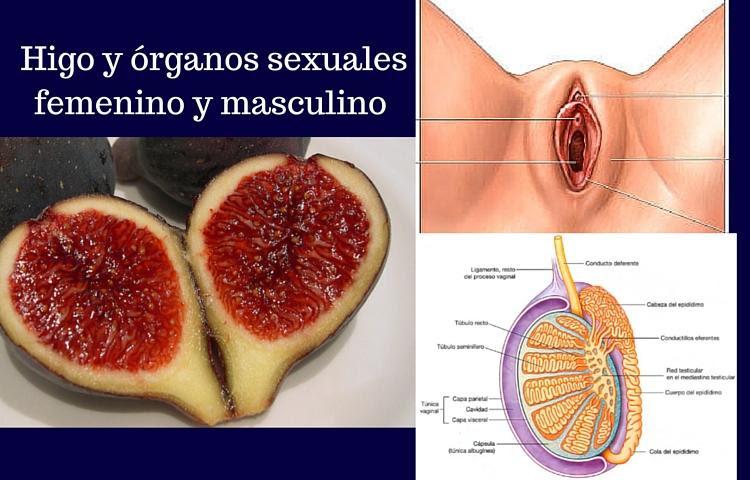 higos y organos sexuales