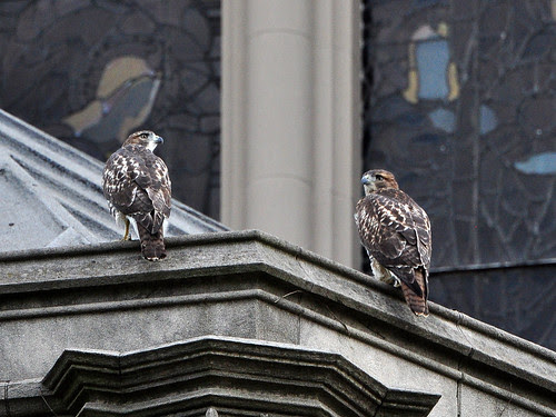 Cathedral RT Fledglings