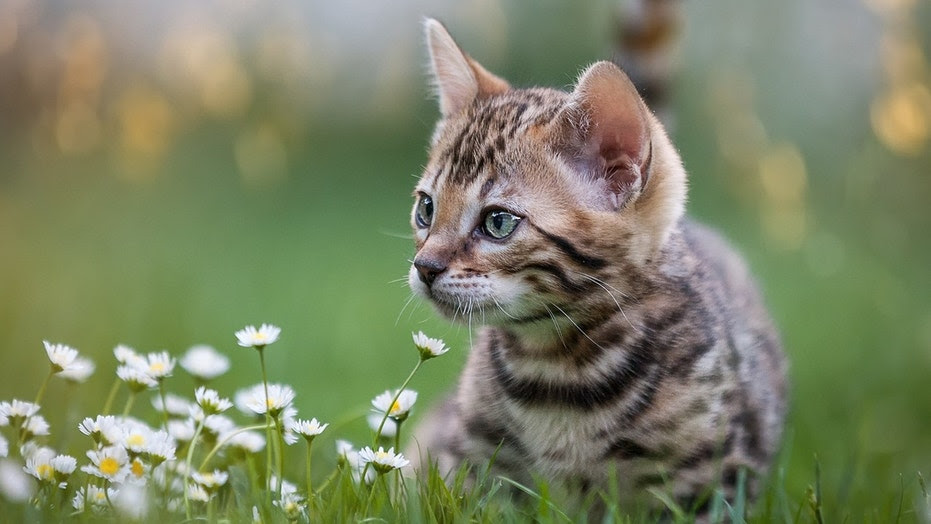 """A town in New Zealand has proposed a """"pest"""" plan to ban cats."""