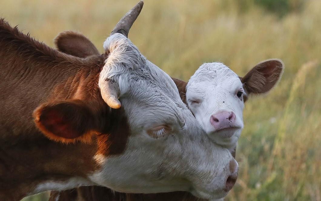 luchshie foto zhivotnyx v avguste 4 Best photos of animals from around the world this week