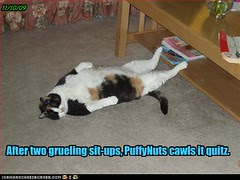 funny-pictures-cat-does-sit-ups[1]