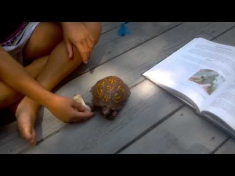 Nature Study - Learning About Turtles