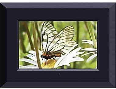 Staples Sungale 7 Inch Digital Picture Frame 20 Free Store Pick