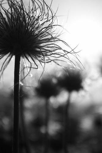 photo Fleur silhouette exposition
