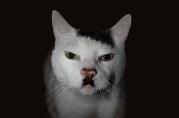 Γάτες που έγιναν διάσημες χάρη στα σημάδια της γούνας τους (7)